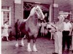 Lute Horse.jpg