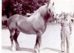 Lute Horse2.jpg