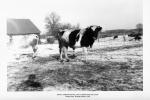 Slanger Farm 012.jpg